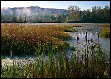 Reeds and beaver marsh, early morning. Cuyahoga Valley National Park, Ohio, USA.