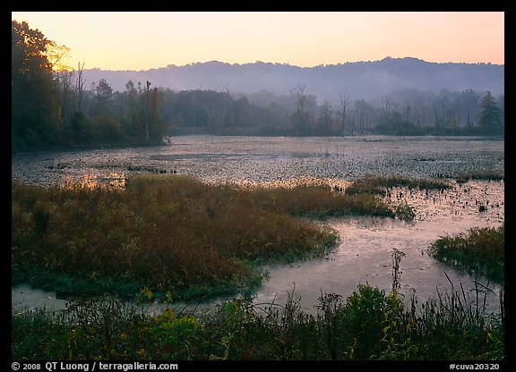 Grasses and Beaver Marsh at sunrise. Cuyahoga Valley National Park, Ohio, USA.
