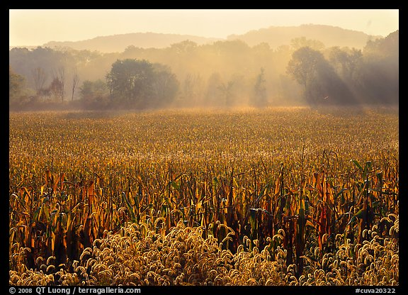 Field with sun and trees throught morning mist. Cuyahoga Valley National Park (color)