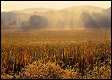 Field with sun and trees throught morning mist. Cuyahoga Valley National Park, Ohio, USA.