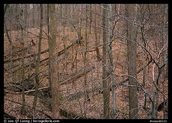 Barren trees and fallen leaves on hillside. Cuyahoga Valley National Park (color)