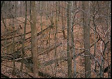 Barren trees and fallen leaves on hillside. Cuyahoga Valley National Park, Ohio, USA. (color)