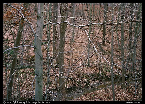 Branches and bare forest. Cuyahoga Valley National Park (color)