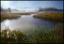Aquatic plants, Beaver Marsh, and mist, early morning. Cuyahoga Valley National Park, Ohio, USA.