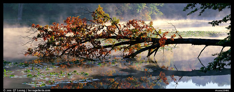 Fallen tree in lake with mist raising. Cuyahoga Valley National Park (color)