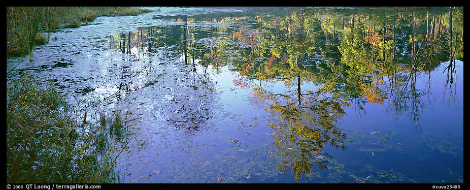 Trees reflected in pond in the fall. Cuyahoga Valley National Park (color)