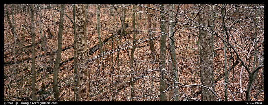 Bare forest with fallen trees on hillside. Cuyahoga Valley National Park (color)
