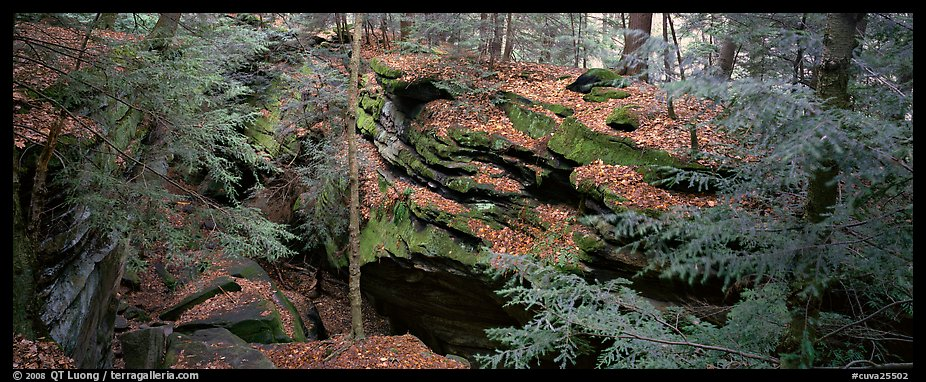 Forest scene with moss-covered limestone rocks. Cuyahoga Valley National Park (color)