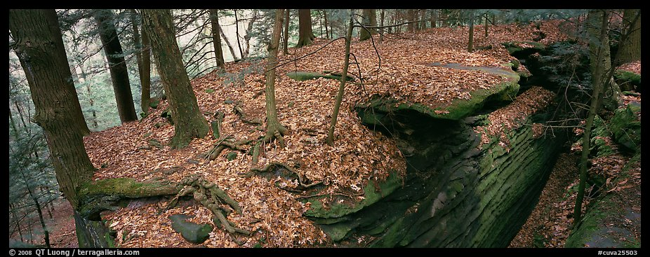 Forest scenery with fallen leaves, fog, and rock cracks. Cuyahoga Valley National Park (color)