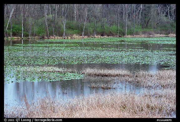 Beaver Marsh in spring. Cuyahoga Valley National Park (color)