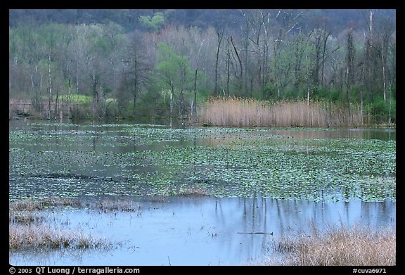 Water lillies and reeds in Beaver Marsh. Cuyahoga Valley National Park (color)