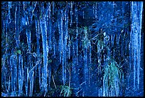 Icicles curtain, Tennessee. Great Smoky Mountains National Park ( color)
