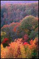 Trees in fall colors over succession of ridges, North Carolina. Great Smoky Mountains National Park, USA. (color)