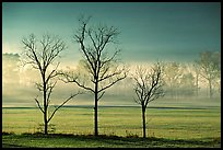 Three bare trees, meadow, and fog, Cades Cove, early morning, Tennessee. Great Smoky Mountains National Park, USA.