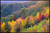 Ridges with trees in fall colors, North Carolina. Great Smoky Mountains National Park, USA. (color)