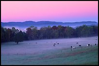 Pasture at dawn with rosy sky, Cades Cove, Tennessee. Great Smoky Mountains National Park, USA. (color)