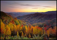 Row of trees, valley and ridges in fall color at sunset, North Carolina. Great Smoky Mountains National Park, USA.