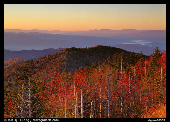 Trees in fall foliage and ridges from Clingman's dome at sunrise, North Carolina. Great Smoky Mountains National Park (color)