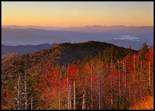 Trees in fall foliage and ridges from Clingman's dome at sunrise, North Carolina. Great Smoky Mountains National Park ( color)