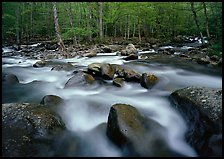 Confluence of the Little Pigeon Rivers, Tennessee. Great Smoky Mountains National Park, USA. (color)