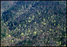 Distant hillside with newly leafed trees, North Carolina. Great Smoky Mountains National Park ( color)