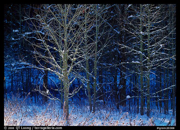 Bare trees in winter, early morning, Tennessee. Great Smoky Mountains National Park (color)