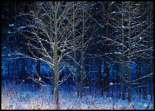 Bare trees in winter, early morning, Tennessee. Great Smoky Mountains National Park, USA.