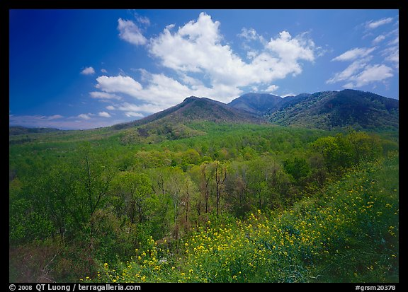 Hillsides covered with trees below Mount Le Conte in the spring, Tennessee. Great Smoky Mountains National Park (color)