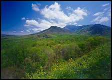 Hillsides covered with trees below Mount Le Conte in the spring, Tennessee. Great Smoky Mountains National Park, USA. (color)