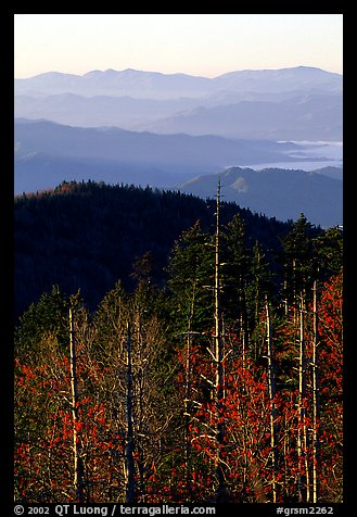 Half-barren trees and ridges from Clingmans Dome at sunrise, North Carolina. Great Smoky Mountains National Park (color)