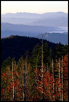 Half-barren trees and ridges from Clingmans Dome at sunrise, North Carolina. Great Smoky Mountains National Park, USA.