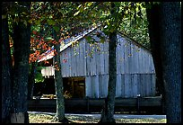Barn in fall, Cades Cove, Tennessee. Great Smoky Mountains National Park, USA. (color)