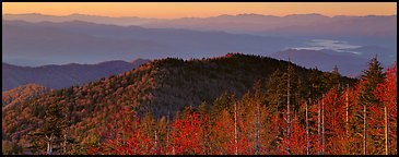 Trees and distant mountaintop ridges at sunrise. Great Smoky Mountains National Park (Panoramic color)