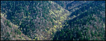 Appalachian hillside in early spring. Great Smoky Mountains National Park (Panoramic color)