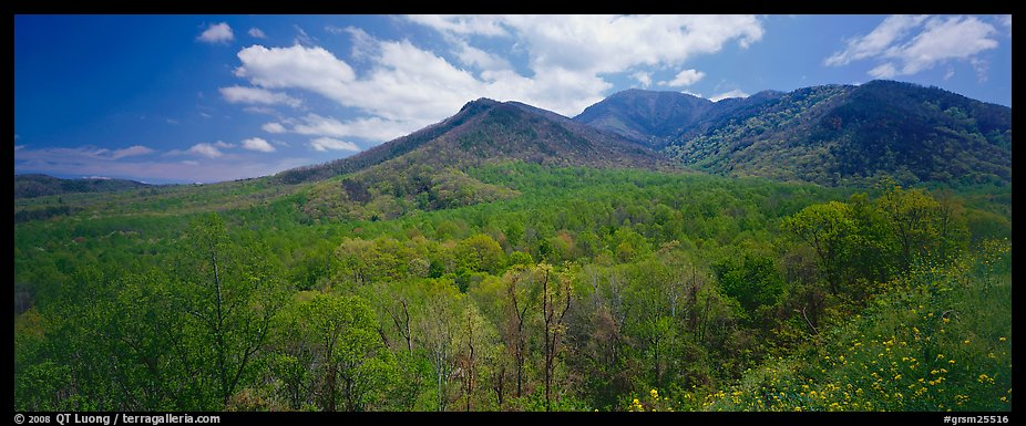 Appalachian hills covered with green trees in the spring. Great Smoky Mountains National Park (color)