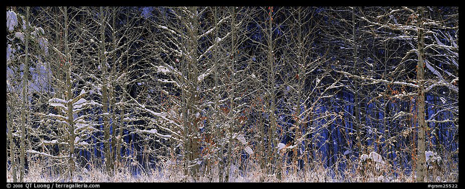 Forest scene in winter with fresh snow. Great Smoky Mountains National Park, USA.
