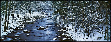 Stream in wintry forest. Great Smoky Mountains National Park (Panoramic color)