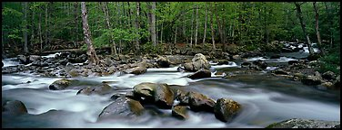 Stream flowing over boulders and spring forest. Great Smoky Mountains National Park (Panoramic color)
