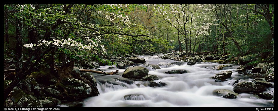Dogwoods and river in the spring. Great Smoky Mountains National Park (color)