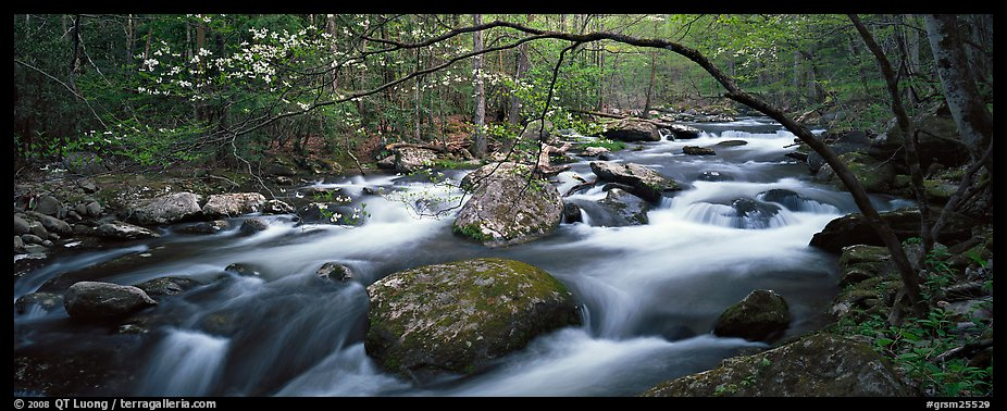 Cascading stream in Appalachian spring forest. Great Smoky Mountains National Park (color)