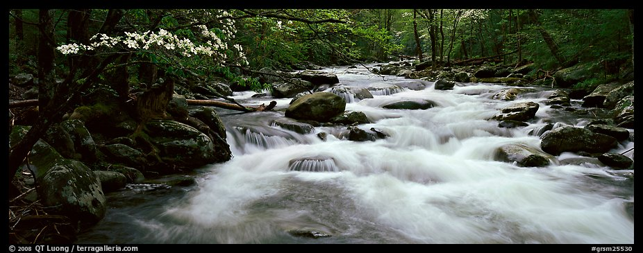 White water of stream in decidous forest. Great Smoky Mountains National Park (color)