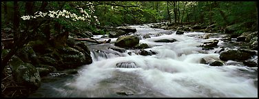 White water of stream in decidous forest. Great Smoky Mountains National Park (Panoramic color)