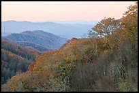 Ridge and mountains covered with trees in autuman foliage, dawn, North Carolina. Great Smoky Mountains National Park, USA.
