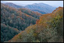 Ridges covered with deciduous trees in fall, North Carolina. Great Smoky Mountains National Park ( color)