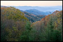 View over mountains in fall colors at dawn, North Carolina. Great Smoky Mountains National Park, USA.