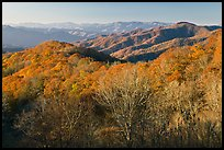 Mountains in autumn foliage, early morning, North Carolina. Great Smoky Mountains National Park, USA.
