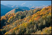 Hills covered with trees in autumn foliage, early morning, North Carolina. Great Smoky Mountains National Park, USA.