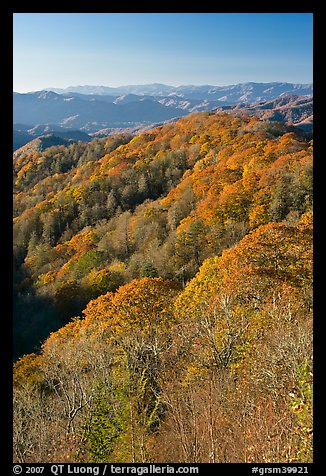 Ridges with trees in fall foliage, North Carolina. Great Smoky Mountains National Park (color)