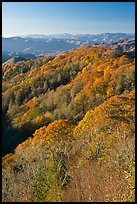 Ridges with trees in fall foliage, North Carolina. Great Smoky Mountains National Park, USA.