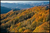 Ridges with trees in autumn foliage, North Carolina. Great Smoky Mountains National Park, USA.